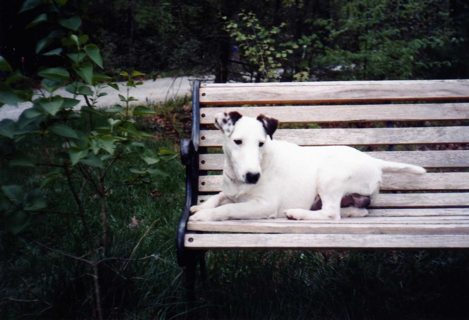 Dog on Park Bench